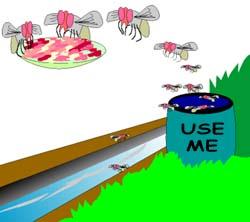 How do Houseflies Spread Diseases?