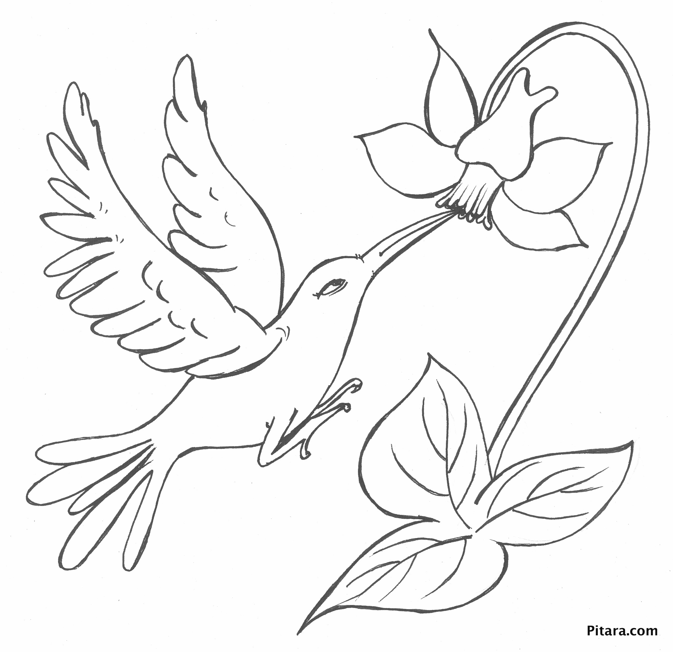 Free coloring pages of birds and flowers