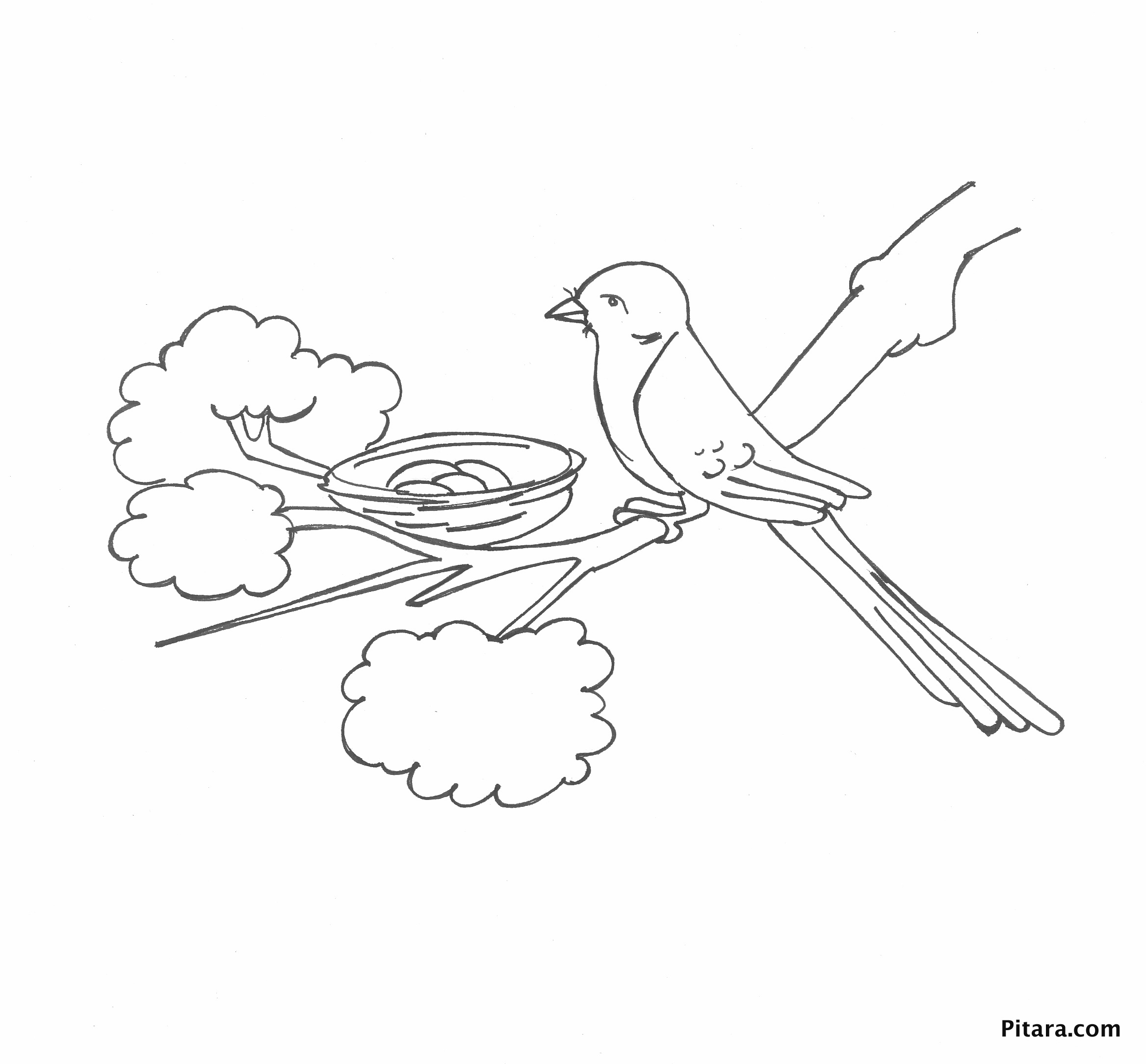 bird in the nest u2013 coloring page pitara kids network