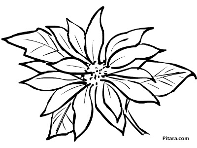 coloring pages of christmas flowers - photo#6