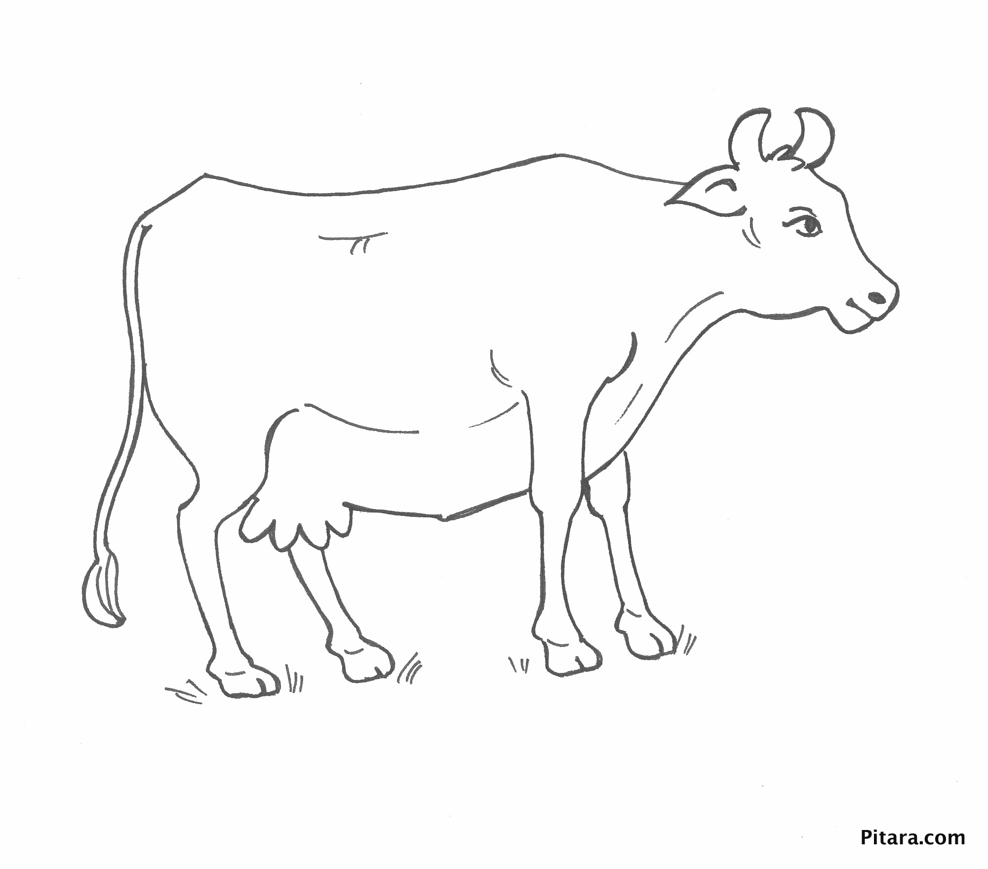 cow u2013 coloring page pitara kids network