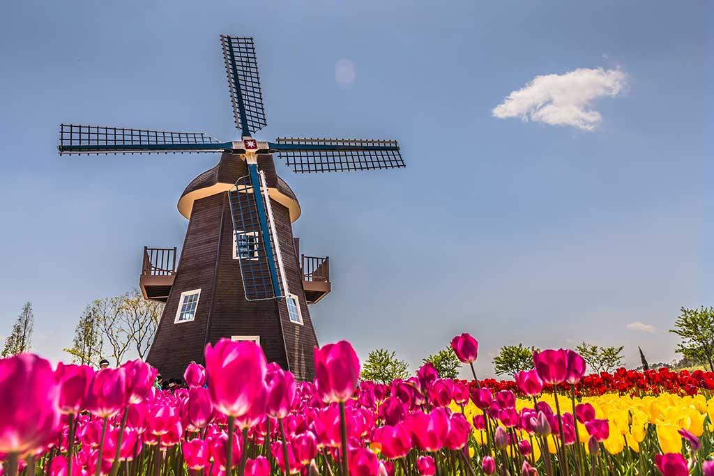 dutch-windmill-netherlands.jpg