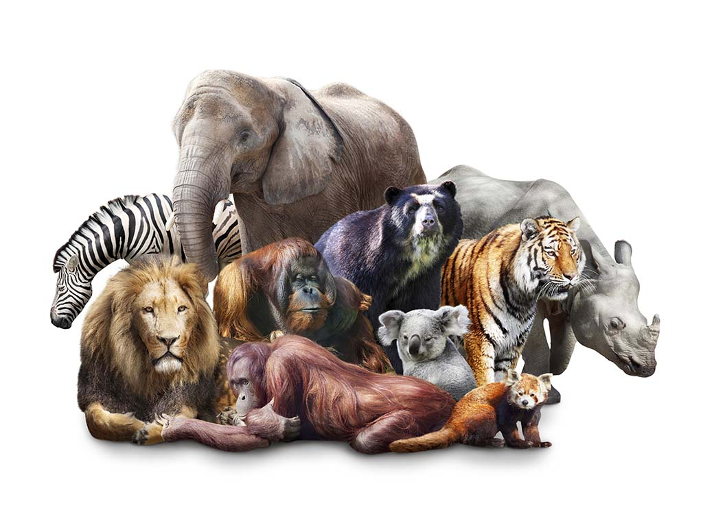Group of wild animals together - photo#7