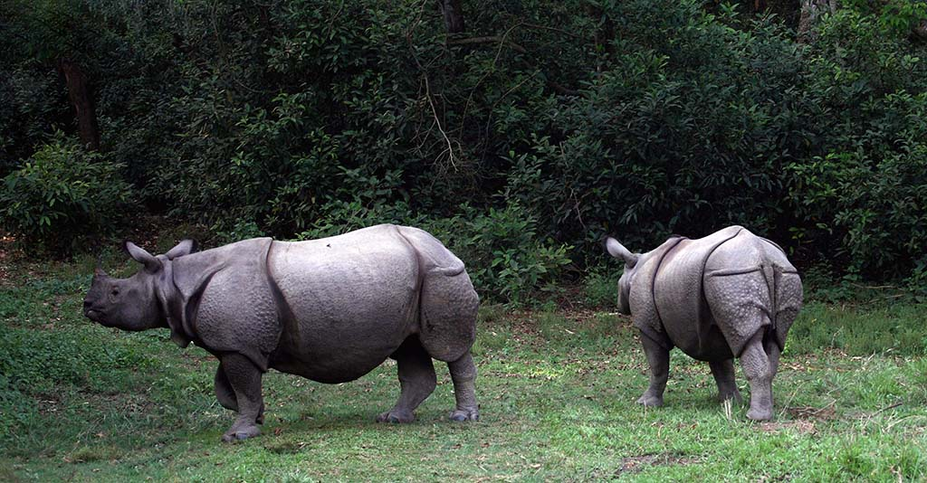 How Many Kinds Of Rhinos Are There Pitara Kids Network