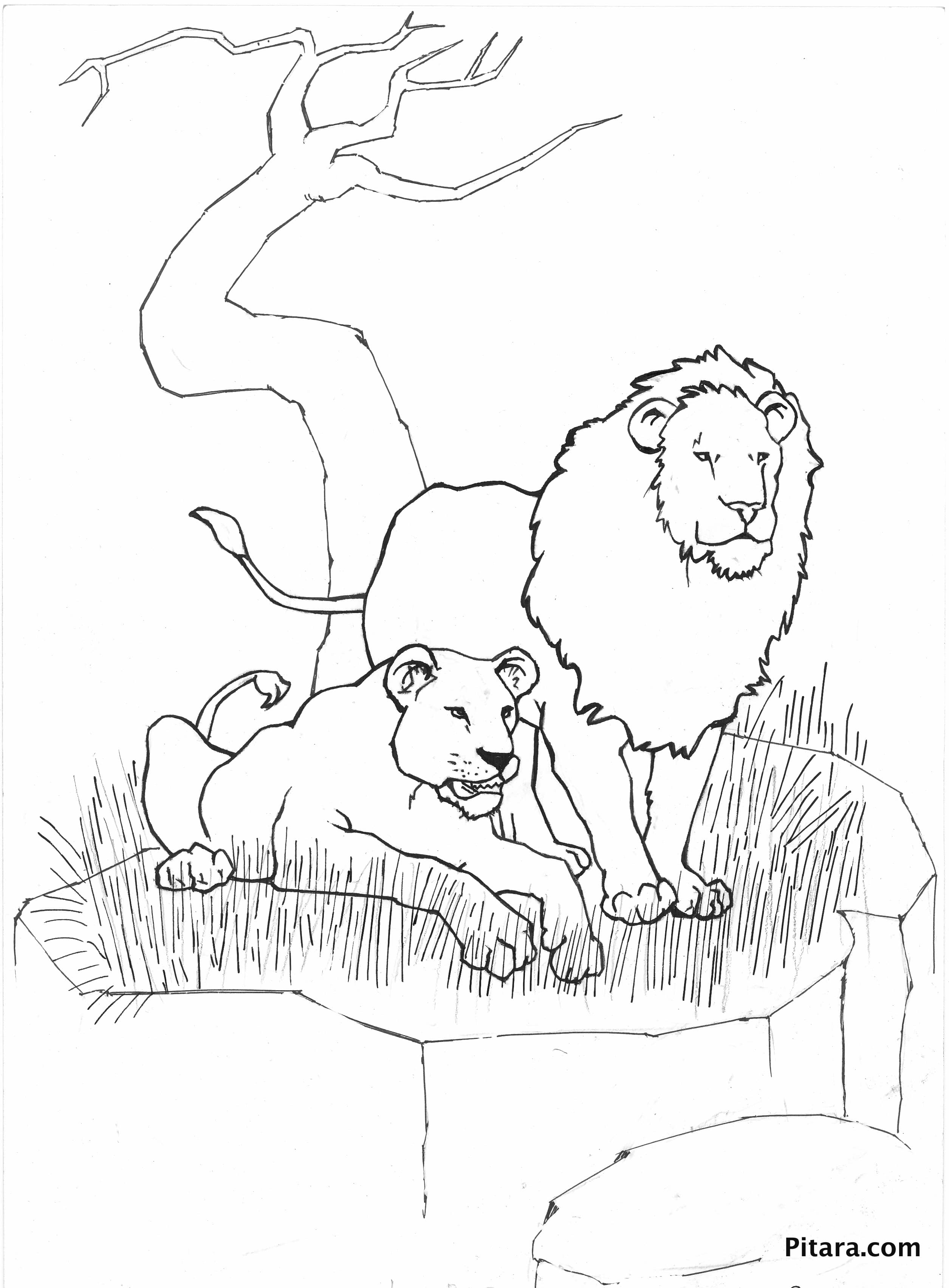 Wild animals coloring pages pitara kids network Crazy animals coloring book