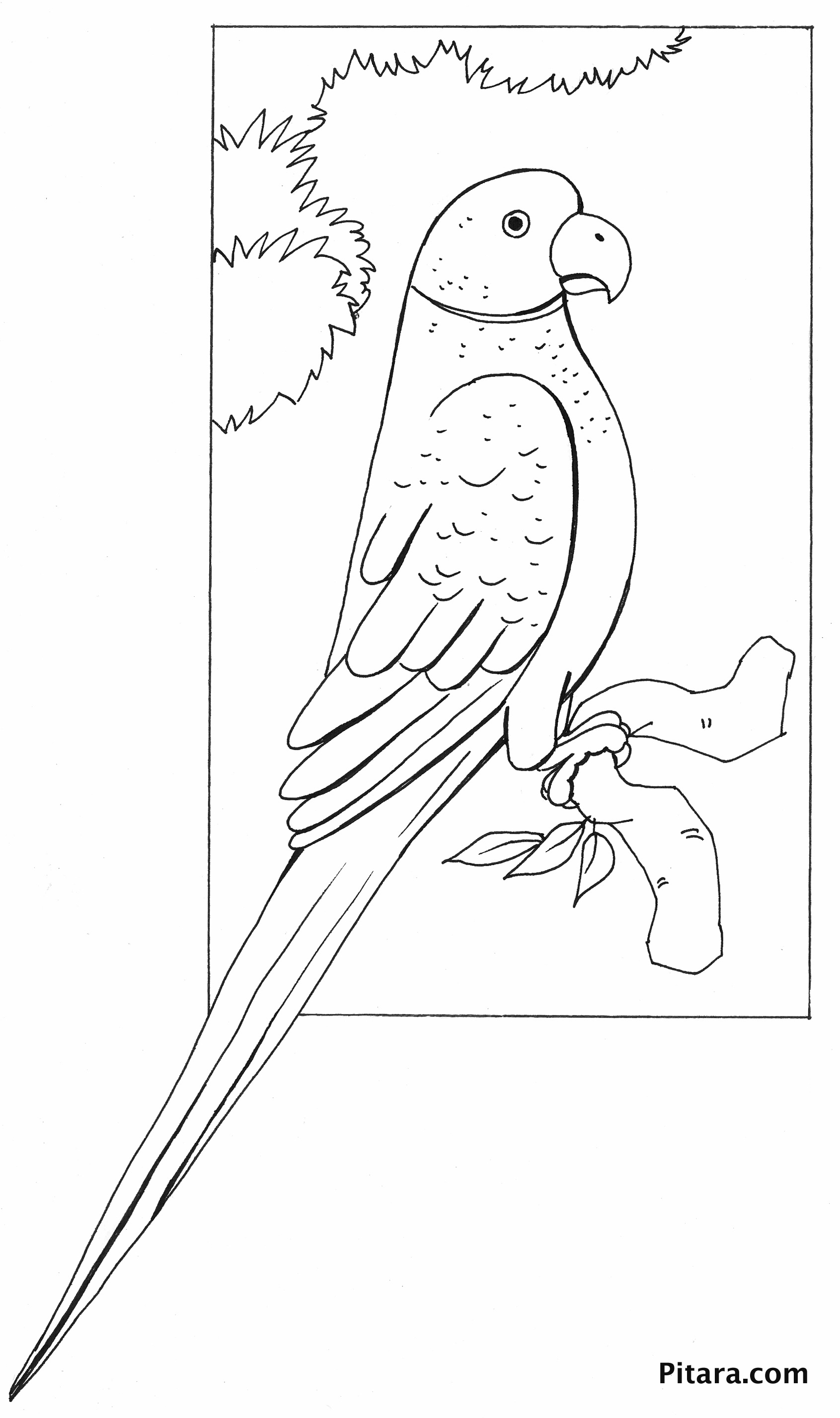 Parrot coloring page pitara kids network for Coloring page parrot