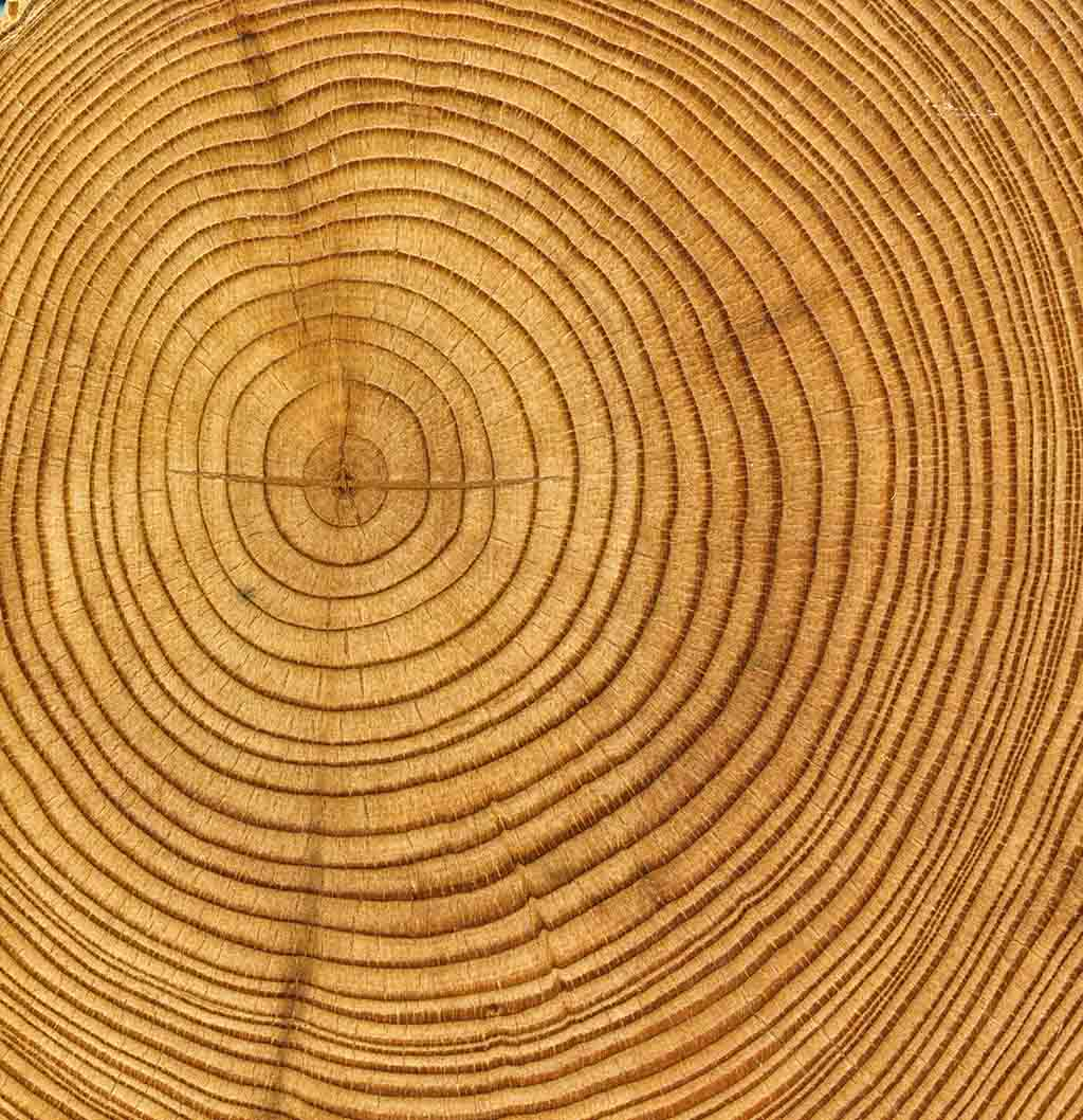 Tree Rings Tell Many Tales on Tree Activities For Kids