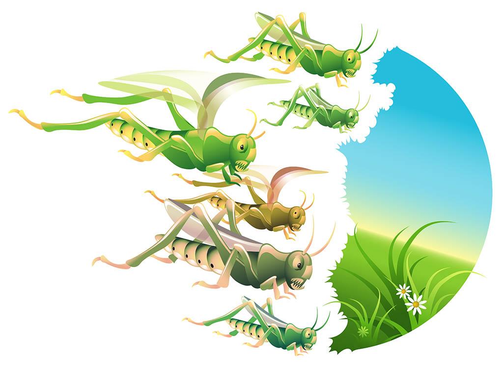 Why do Locusts Swarm?