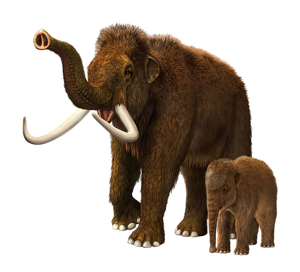 Artistic recreation of baby & mother Wooly Mammoth
